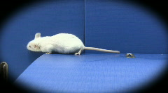 Mouse on folders Stock Footage