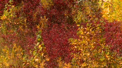 Bow River, vibrant autumn trees, #2 Stock Footage