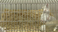 Mouses in cage Stock Footage
