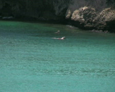 People snorkeling in the knip bay 2 PAL Stock Footage