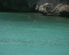 People snorkeling in the knip bay 2 PAL - stock footage
