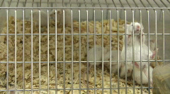 Mouse action in cage Stock Footage