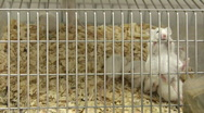 Stock Video Footage of mouse action in cage