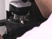 Stock Video Footage of microscope examination NTSC