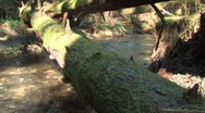 Rain Forest Creek with log in foreground Stock Footage