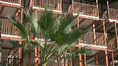 Palm tree in a resort Stock Footage
