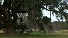 Oak tree closeup Stock Footage