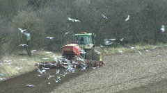 Seabirds behind seed drill - back view 3 Stock Footage