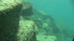 Snook Underwater Stock Footage