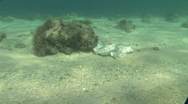 Underwater Fish Carcass Stock Footage