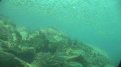 Fish Underwater Stock Footage