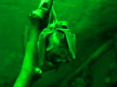 Stock Video Footage of Bat - nightvision clip