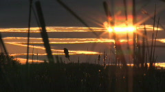 Blackbird singing at sunset silhouette with marsh sounds in background Stock Footage