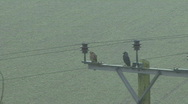 Stock Video Footage of Kestrel and Jackdaw on power pole in fine rain - Jackdaw flies away