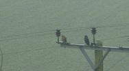 Stock Video Footage of Kestrel and Jackdaw on power pole in fine rain - Jackdaw flies away