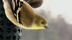 Birds Feeding Stock Footage