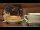 Breakfast rat Stock Footage