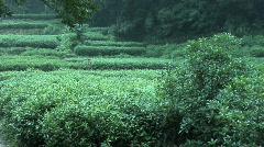 Hang Zhou Tea Fields and Tea House 4 Stock Footage