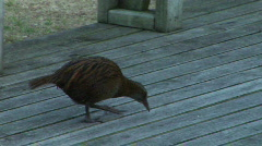 Weka on Deck Stock Footage