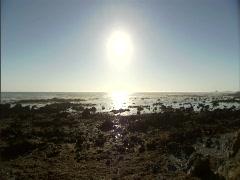 Ocean Seagulls Stock Footage