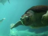 Turtle Stock Footage