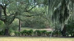 Oak landscape Stock Footage