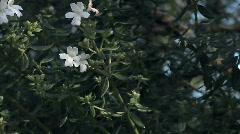 Flowers 51 Stock Footage