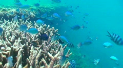 Swimming with fish - stock footage