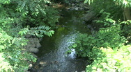 Stock Video Footage of River In New England Forest