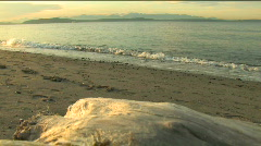 Driftwood on Alki Beach in West Seattle Stock Footage