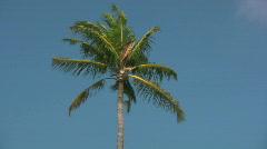 Palmtree Stock Footage