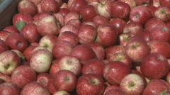 Royal gala apples in bin pan Stock Footage