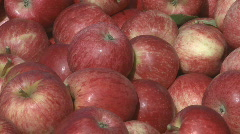 Royal gala apples in bin Stock Footage