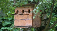 Triple birdhouse Stock Footage