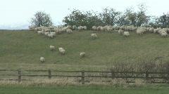 Sheep run and jump across field Stock Footage