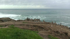 San Diego Coastline with Birds on Cliff Stock Footage