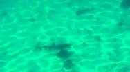 Shark below Stock Footage