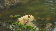 Clear water in a river on the island of Mindoro in the Philippines Stock Footage