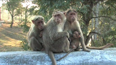 Monkey family Stock Footage