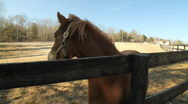 Stock Video Footage of Horse2