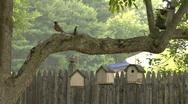 Bird Houses Stock Footage
