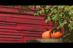 Red barn pumpkins Stock Footage