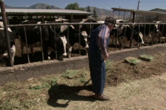 Farm Life 04 Stock Footage