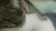 Cat Eyes Stock Footage