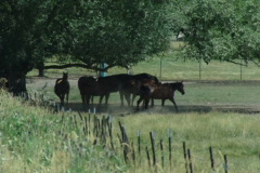 Farm Life 03 Stock Footage