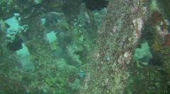 Sabang wreck Stock Footage