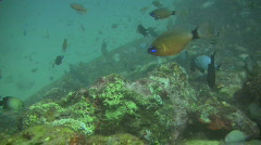 Sabang wrecks in peurto Galera on Oriental Mindoro in the Philippines Stock Footage
