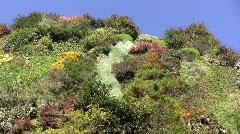 Vertical Garden 03 Arkistovideo