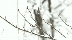 snowfall - high key branches - stock footage