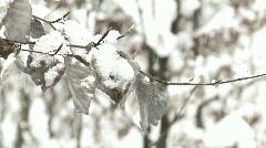 Snowfall - high key closeup Stock Footage